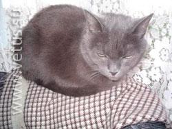 кошка Анфиса благодарит ветврачей клиники «Ветус» за чуткий подход