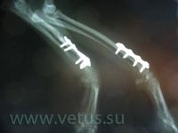 остеосинтез переломов у собак