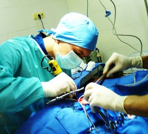 оперативная хирургия животных