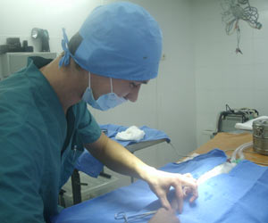 хирургия животных